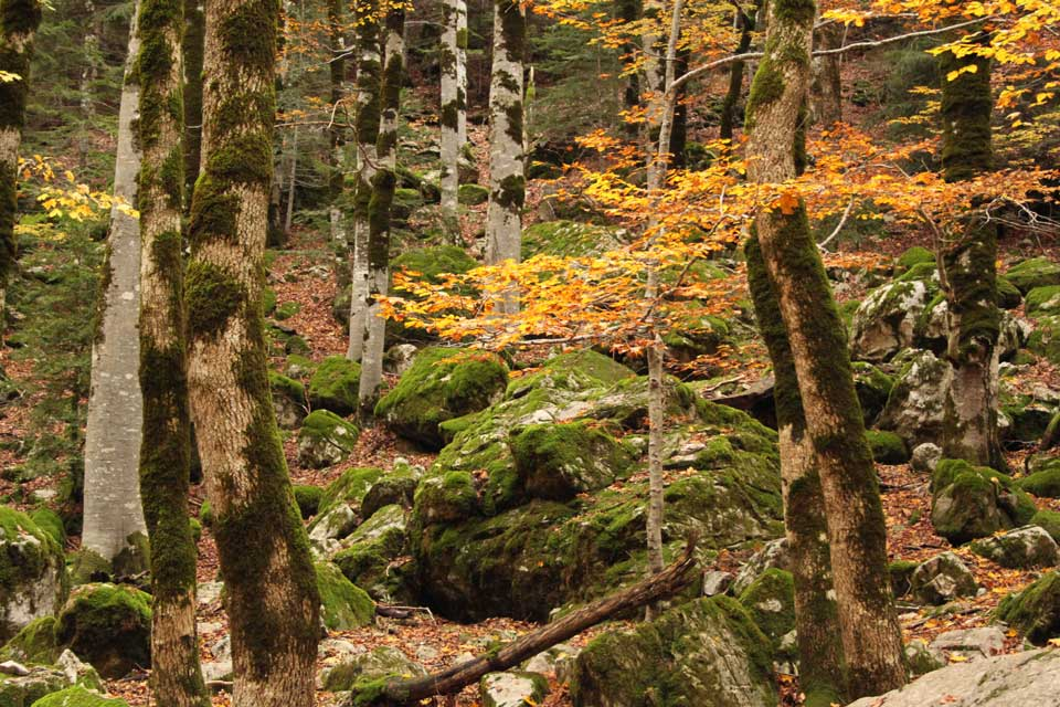 salida-adaptada-bosque