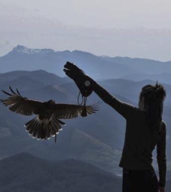 Estudio etológico sobre nuestra Águila de Harris